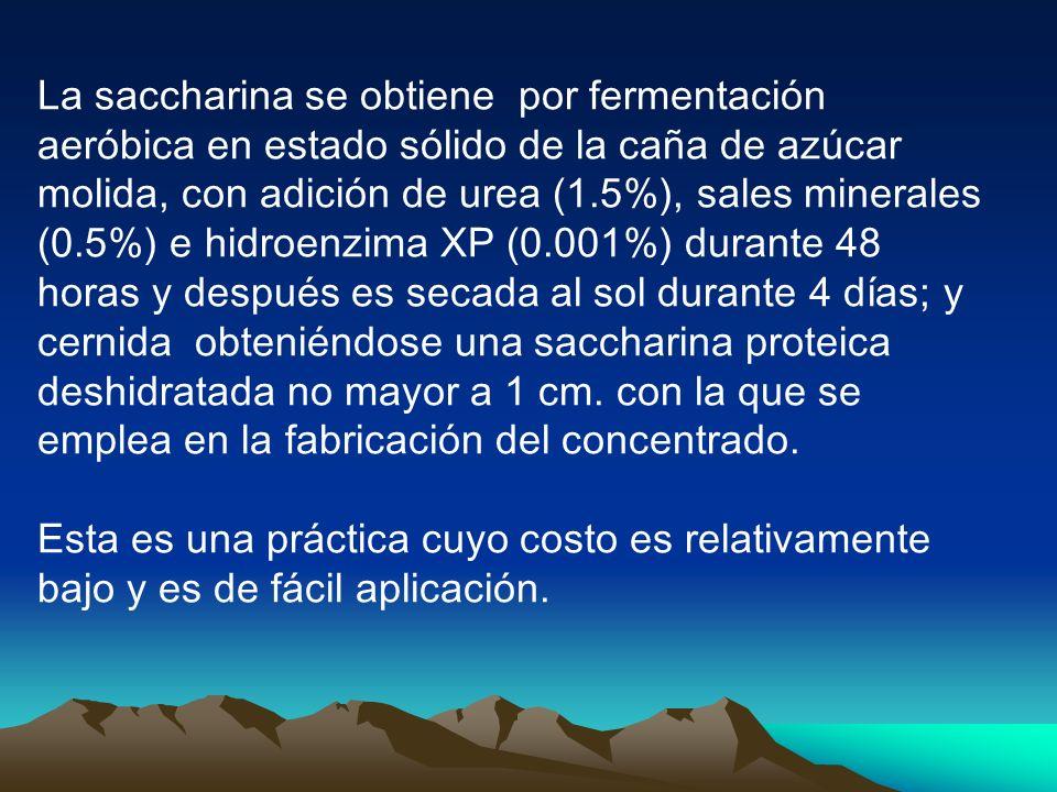 La saccharina se obtiene por fermentación aeróbica en estado sólido de la caña de azúcar molida, con adición de urea (1.5%), sales minerales (0.5%) e hidroenzima XP (0.001%) durante 48 horas y después es secada al sol durante 4 días; y cernida obteniéndose una saccharina proteica deshidratada no mayor a 1 cm.