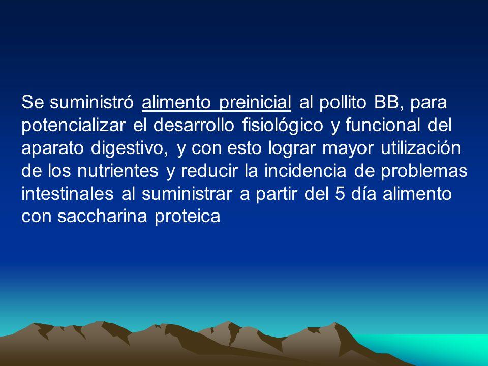 Se suministró alimento preinicial al pollito BB, para potencializar el desarrollo fisiológico y funcional del aparato digestivo, y con esto lograr mayor utilización de los nutrientes y reducir la incidencia de problemas intestinales al suministrar a partir del 5 día alimento con saccharina proteica
