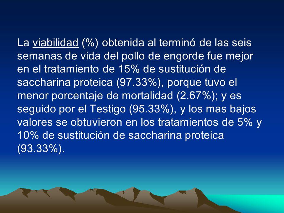 La viabilidad (%) obtenida al terminó de las seis semanas de vida del pollo de engorde fue mejor en el tratamiento de 15% de sustitución de saccharina proteica (97.33%), porque tuvo el menor porcentaje de mortalidad (2.67%); y es seguido por el Testigo (95.33%), y los mas bajos valores se obtuvieron en los tratamientos de 5% y 10% de sustitución de saccharina proteica (93.33%).