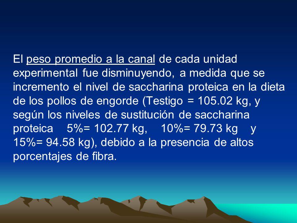 El peso promedio a la canal de cada unidad experimental fue disminuyendo, a medida que se incremento el nivel de saccharina proteica en la dieta de los pollos de engorde (Testigo = 105.02 kg, y según los niveles de sustitución de saccharina proteica 5%= 102.77 kg, 10%= 79.73 kg y 15%= 94.58 kg), debido a la presencia de altos porcentajes de fibra.