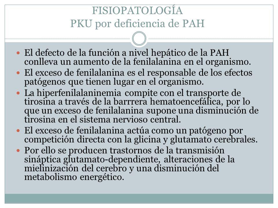 FISIOPATOLOGÍA PKU por deficiencia de PAH