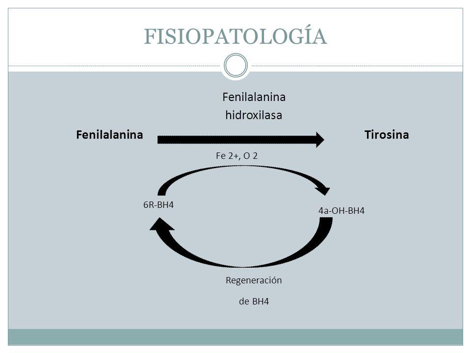 FISIOPATOLOGÍA Fenilalanina hidroxilasa Tirosina Fe 2+, O 2 4a-OH-BH4