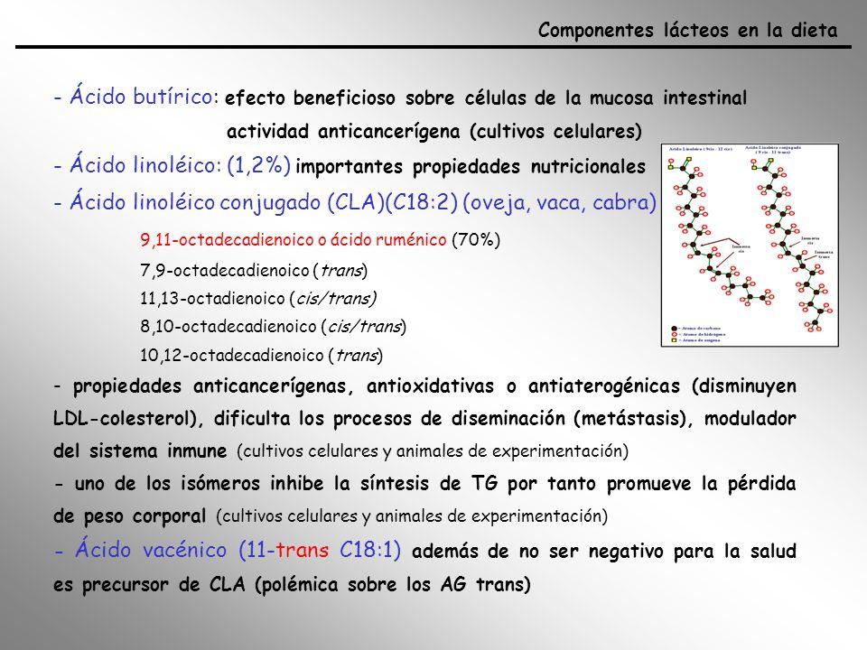 - Ácido linoléico: (1,2%) importantes propiedades nutricionales
