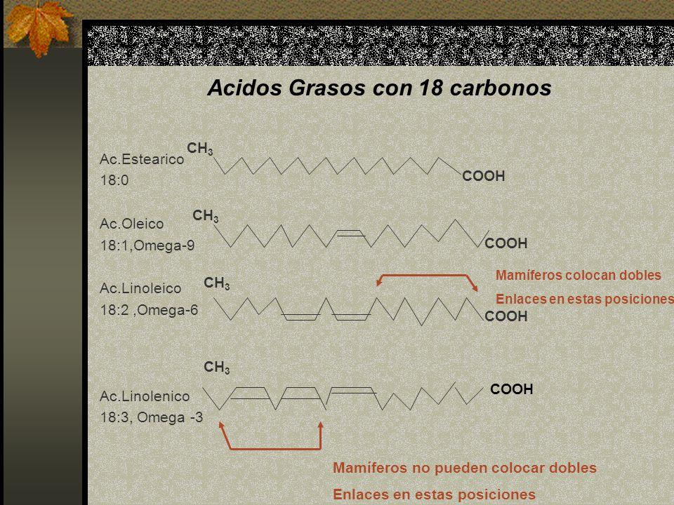 Acidos Grasos con 18 carbonos