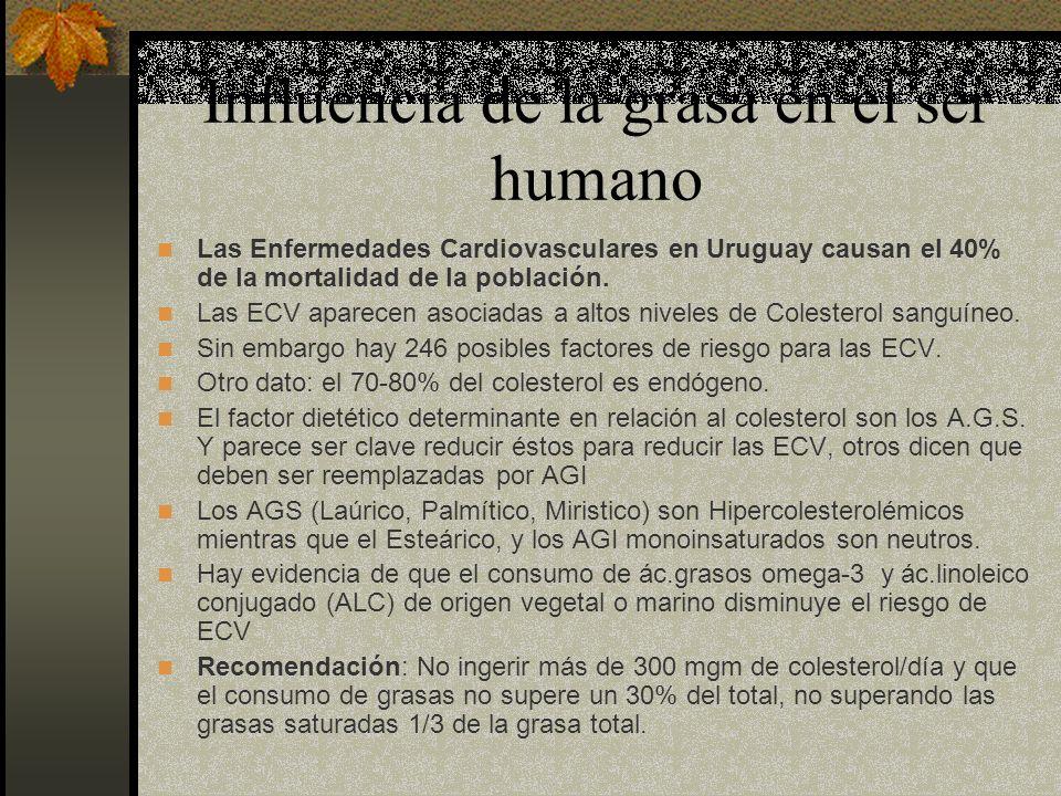Influencia de la grasa en el ser humano