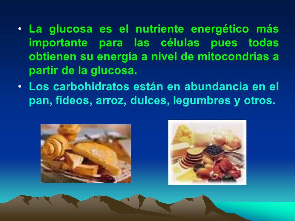 La glucosa es el nutriente energético más importante para las células pues todas obtienen su energía a nivel de mitocondrias a partir de la glucosa.