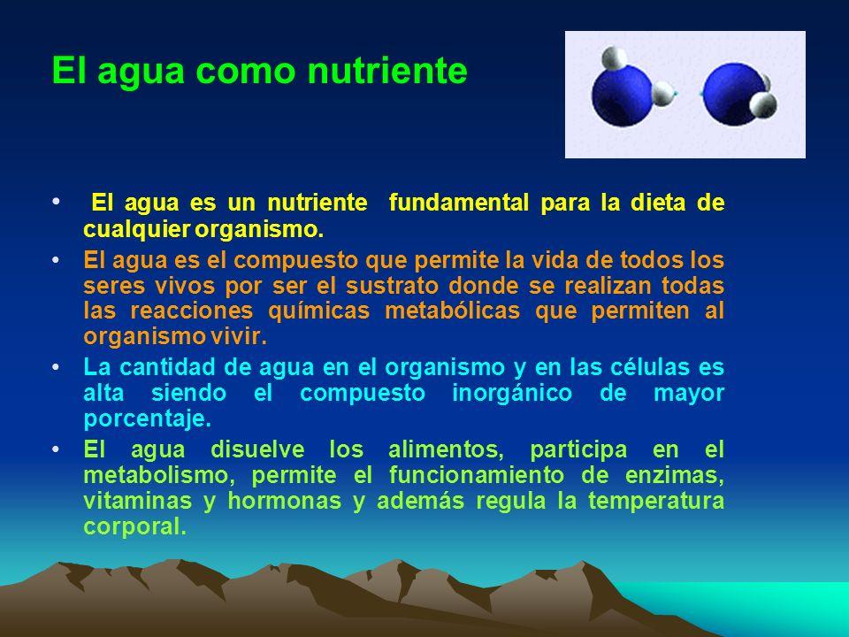 El agua como nutriente El agua es un nutriente fundamental para la dieta de cualquier organismo.