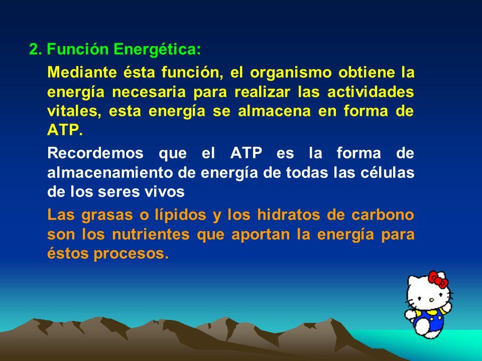 2. Función Energética: