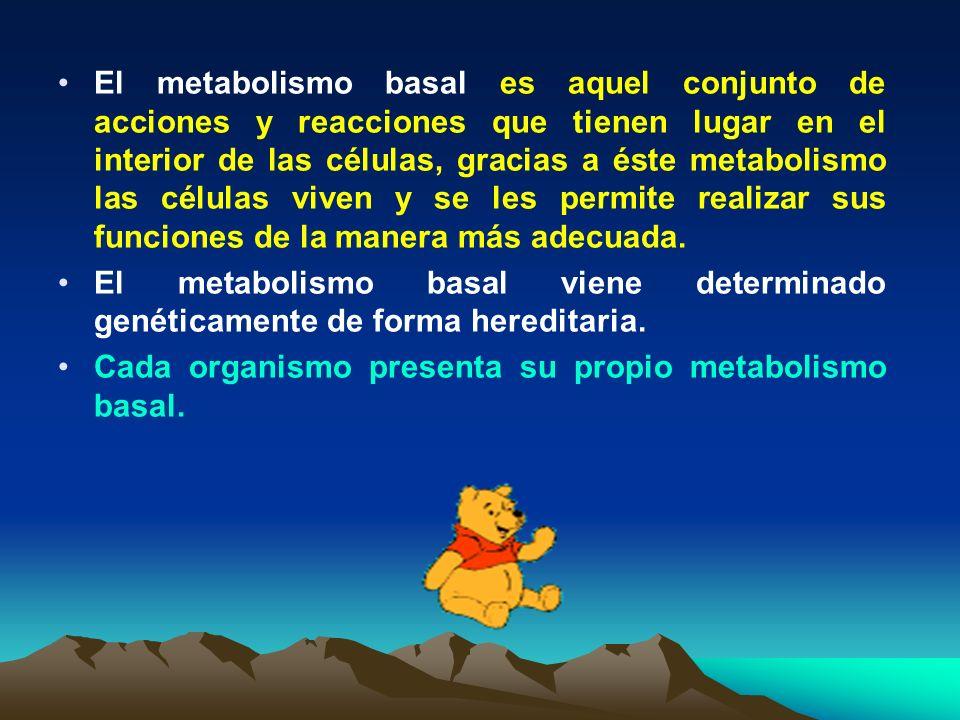 El metabolismo basal es aquel conjunto de acciones y reacciones que tienen lugar en el interior de las células, gracias a éste metabolismo las células viven y se les permite realizar sus funciones de la manera más adecuada.