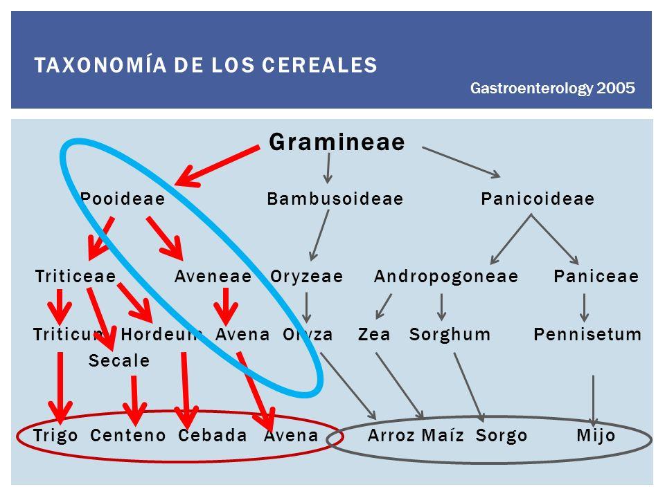 TAXONOMÍA DE LOS CEREALES