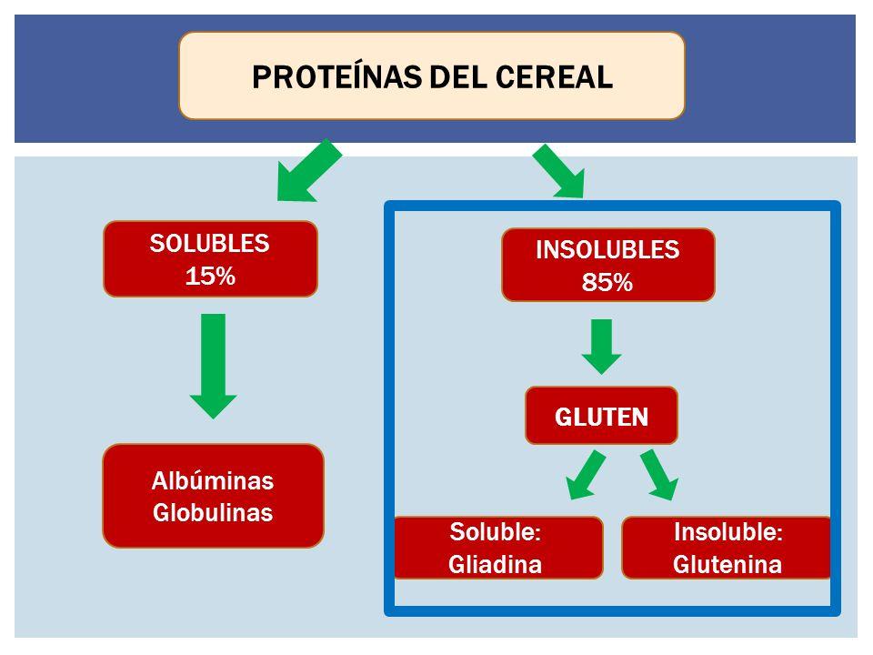 PROTEÍNAS DEL CEREAL SOLUBLES 15% INSOLUBLES 85% GLUTEN Albúminas