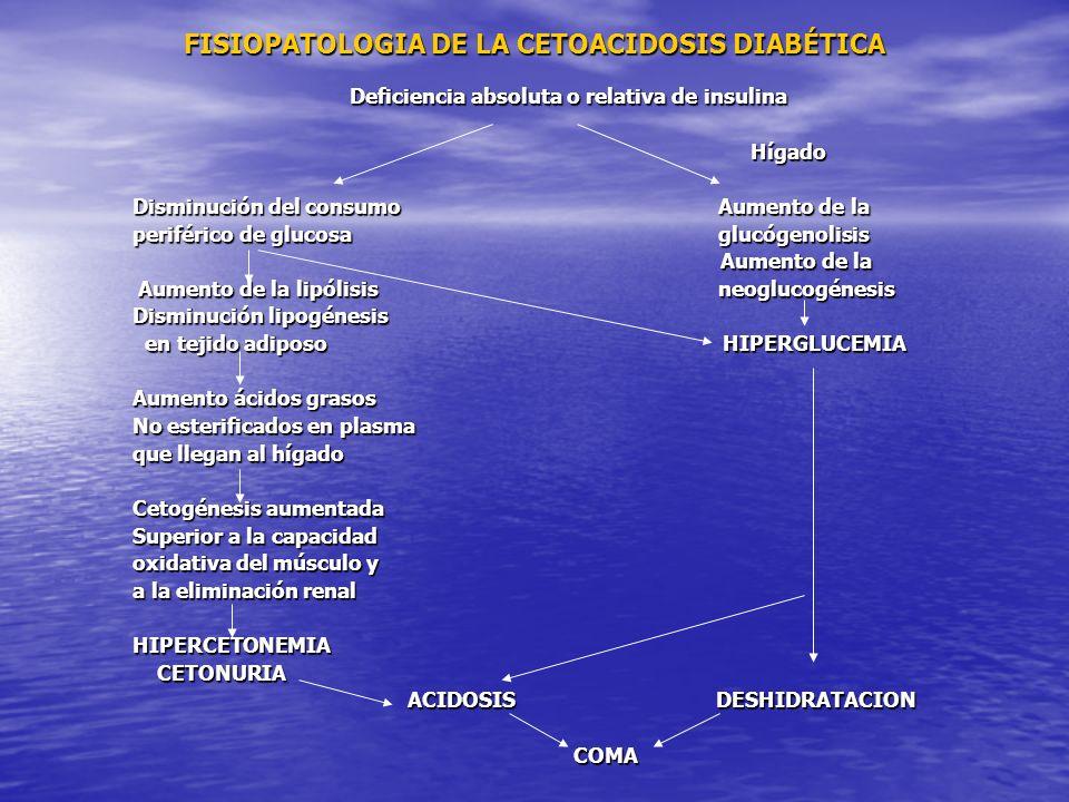 FISIOPATOLOGIA DE LA CETOACIDOSIS DIABÉTICA