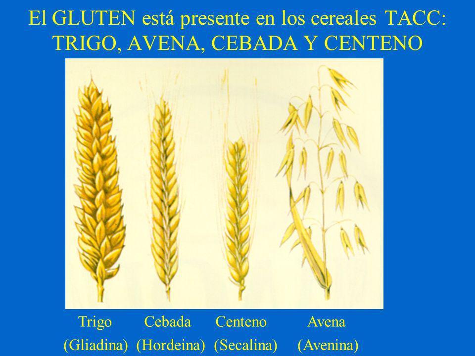 El GLUTEN está presente en los cereales TACC: TRIGO, AVENA, CEBADA Y CENTENO