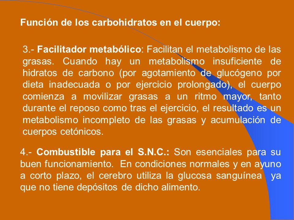 Función de los carbohidratos en el cuerpo: