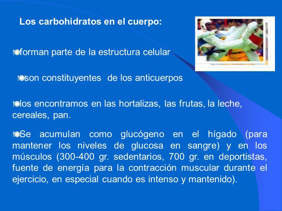Los carbohidratos en el cuerpo: