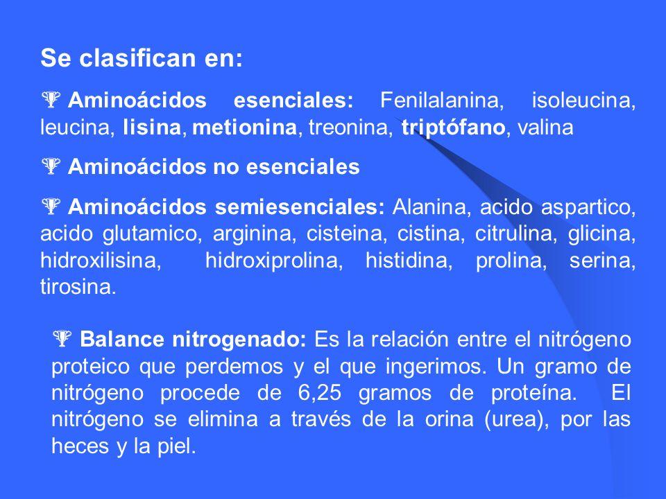 Se clasifican en: Aminoácidos esenciales: Fenilalanina, isoleucina, leucina, lisina, metionina, treonina, triptófano, valina.