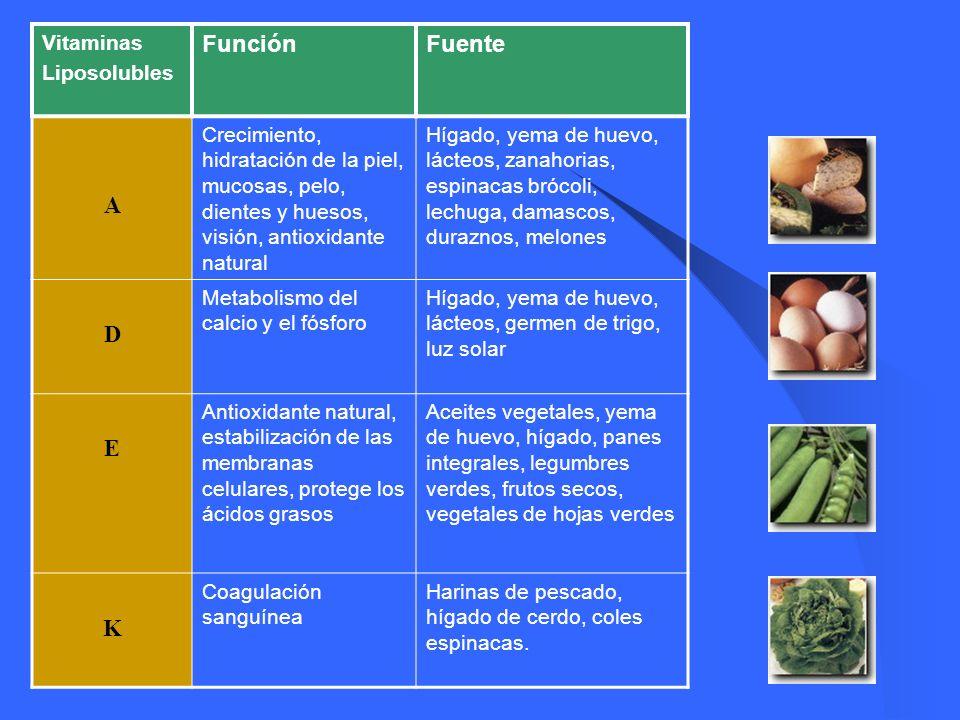 Función Fuente A D E K Vitaminas Liposolubles