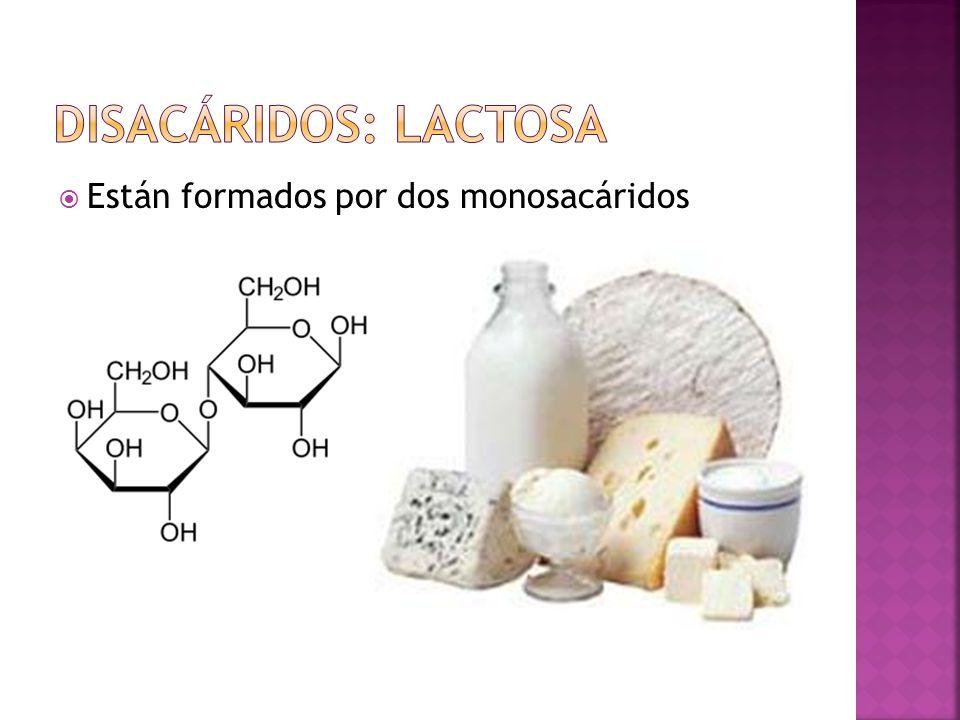 Disacáridos: Lactosa Están formados por dos monosacáridos