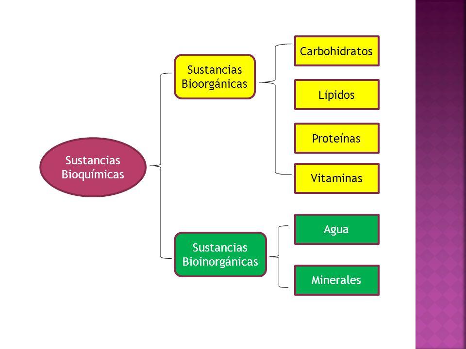 Sustancias Bioorgánicas