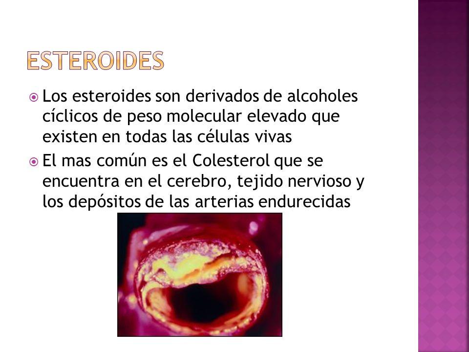 Esteroides Los esteroides son derivados de alcoholes cíclicos de peso molecular elevado que existen en todas las células vivas.