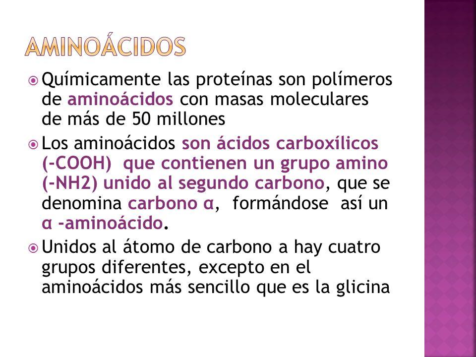 Aminoácidos Químicamente las proteínas son polímeros de aminoácidos con masas moleculares de más de 50 millones.