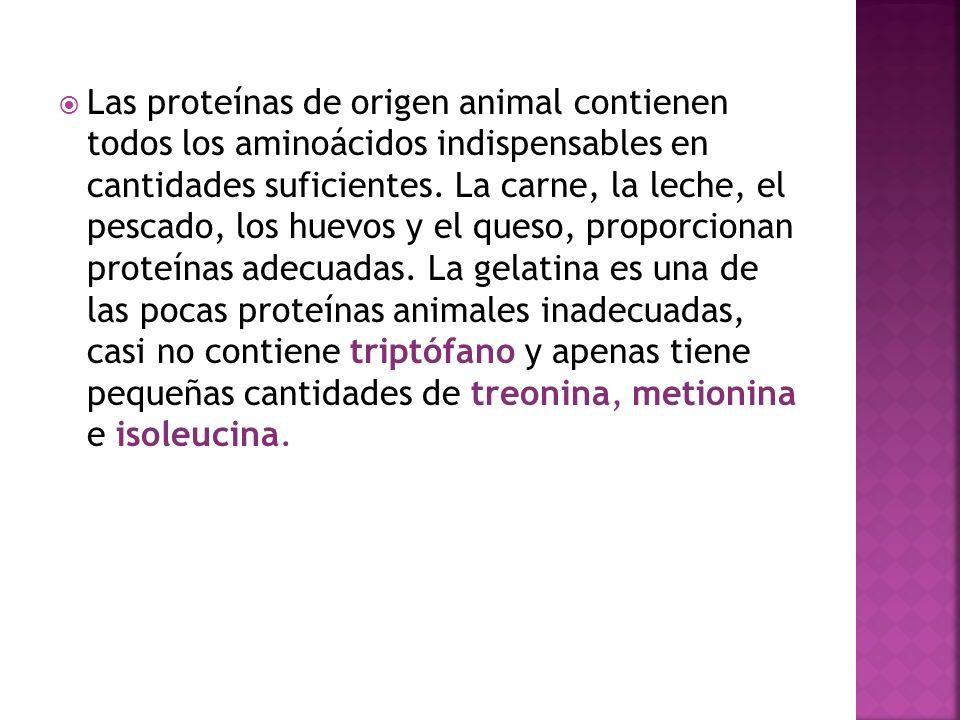 Las proteínas de origen animal contienen todos los aminoácidos indispensables en cantidades suficientes.