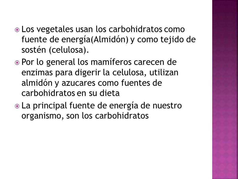 Los vegetales usan los carbohidratos como fuente de energía(Almidón) y como tejido de sostén (celulosa).