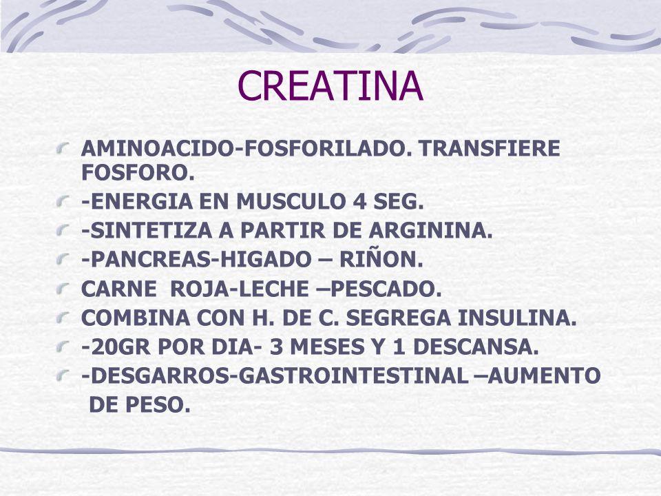 CREATINA AMINOACIDO-FOSFORILADO. TRANSFIERE FOSFORO.