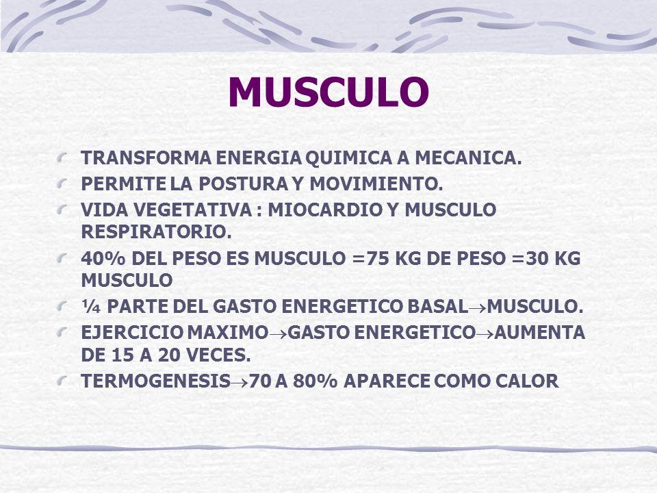 MUSCULO TRANSFORMA ENERGIA QUIMICA A MECANICA.