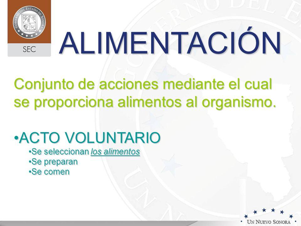 ALIMENTACIÓN Conjunto de acciones mediante el cual se proporciona alimentos al organismo. ACTO VOLUNTARIO.