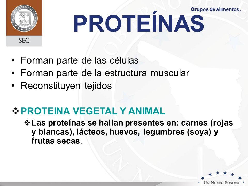 PROTEÍNAS Forman parte de las células