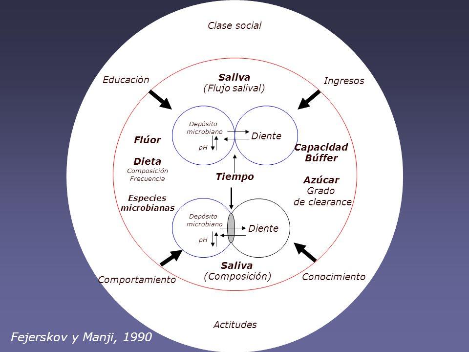 Fejerskov y Manji, 1990 Clase social Saliva Educación Ingresos