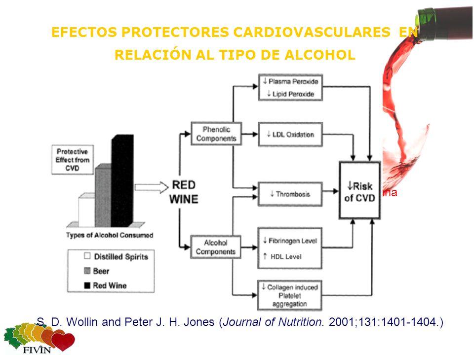 EFECTOS PROTECTORES CARDIOVASCULARES EN RELACIÓN AL TIPO DE ALCOHOL