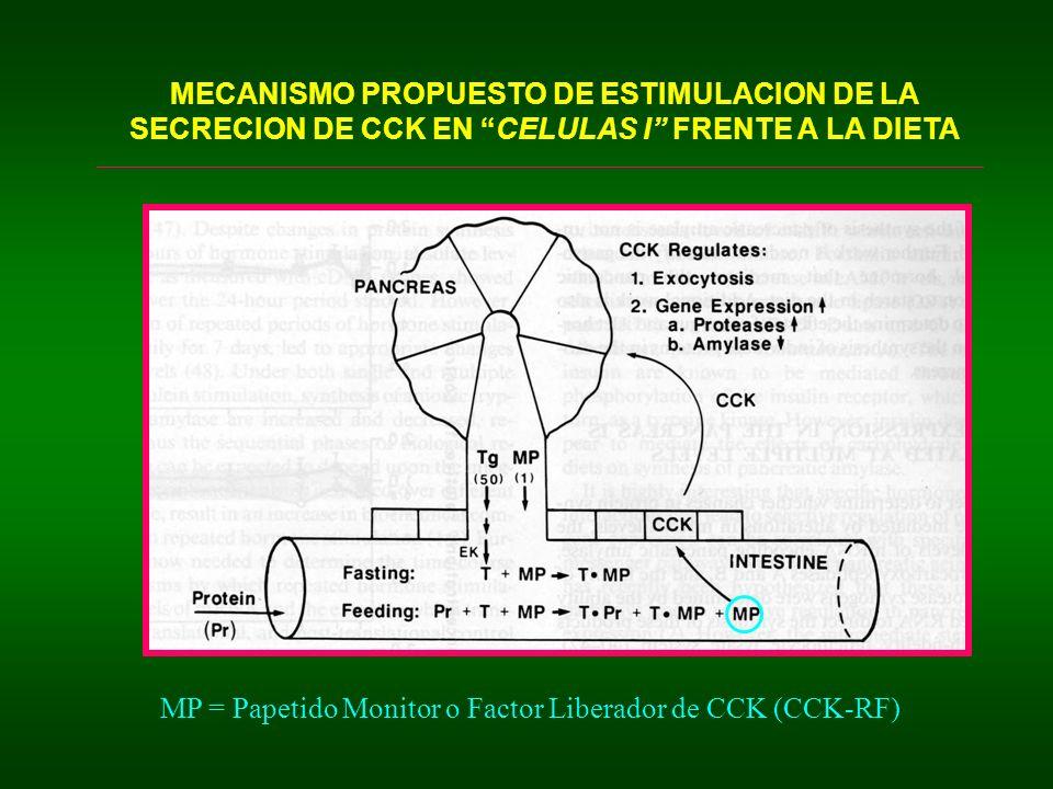 MECANISMO PROPUESTO DE ESTIMULACION DE LA SECRECION DE CCK EN CELULAS I FRENTE A LA DIETA
