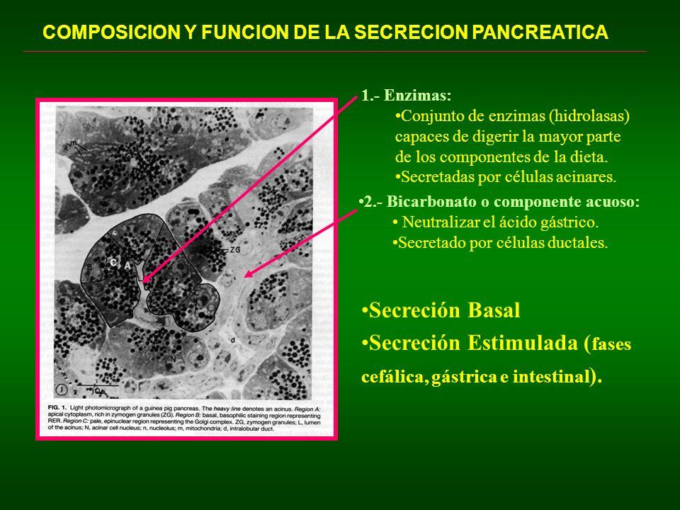 Secreción Estimulada (fases cefálica, gástrica e intestinal).
