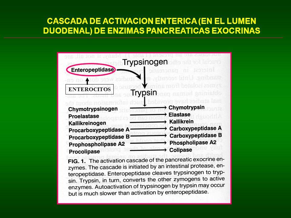 CASCADA DE ACTIVACION ENTERICA (EN EL LUMEN DUODENAL) DE ENZIMAS PANCREATICAS EXOCRINAS