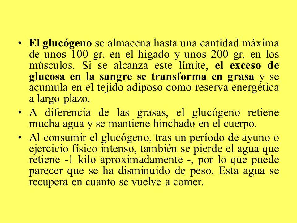 El glucógeno se almacena hasta una cantidad máxima de unos 100 gr