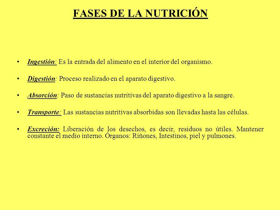 FASES DE LA NUTRICIÓN Ingestión: Es la entrada del alimento en el interior del organismo. Digestión: Proceso realizado en el aparato digestivo.