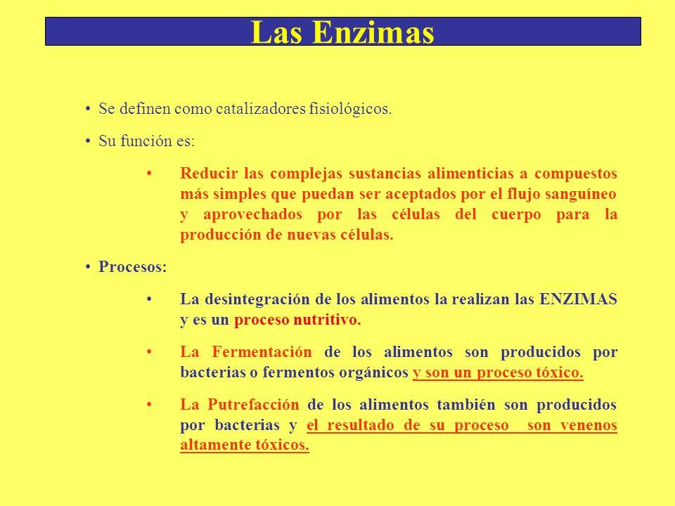 Las Enzimas Se definen como catalizadores fisiológicos. Su función es: