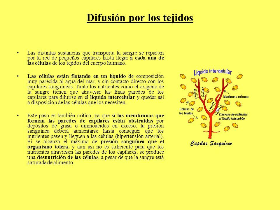 Difusión por los tejidos