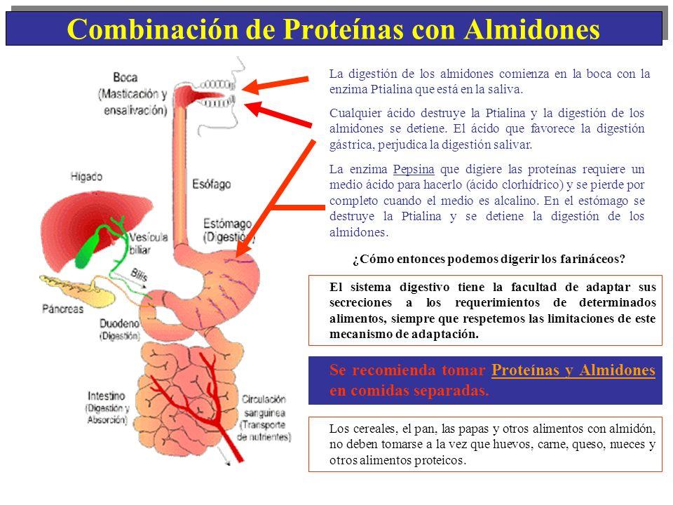 Combinación de Proteínas con Almidones