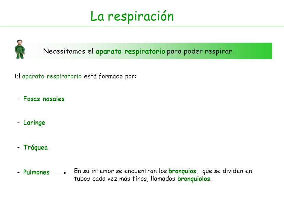 La respiración Necesitamos el aparato respiratorio para poder respirar. El aparato respiratorio está formado por: