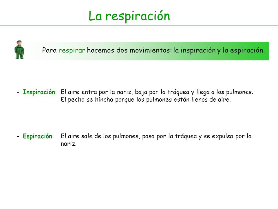 La respiraciónPara respirar hacemos dos movimientos: la inspiración y la espiración. - Inspiración: