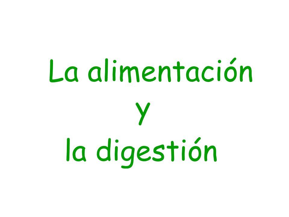 La alimentación y la digestión