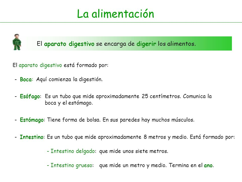 La alimentaciónEl aparato digestivo se encarga de digerir los alimentos. El aparato digestivo está formado por:
