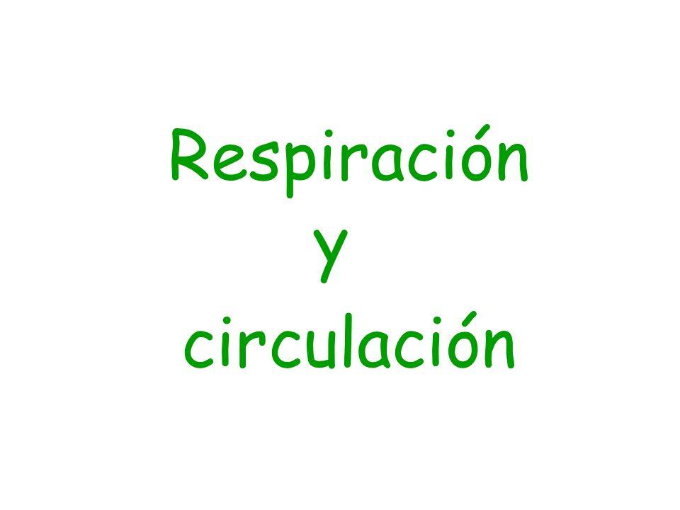 Respiración y circulación