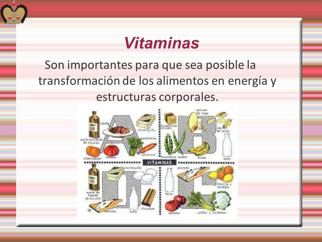 Vitaminas Son importantes para que sea posible la transformación de los alimentos en energía y estructuras corporales.