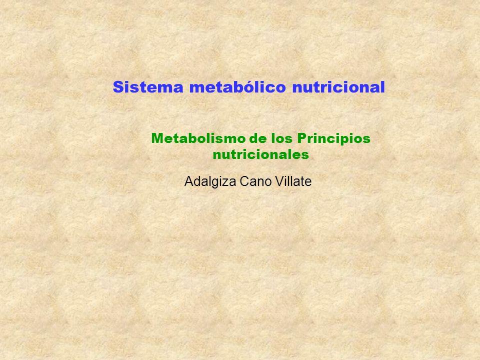 Metabolismo de los Principios nutricionales