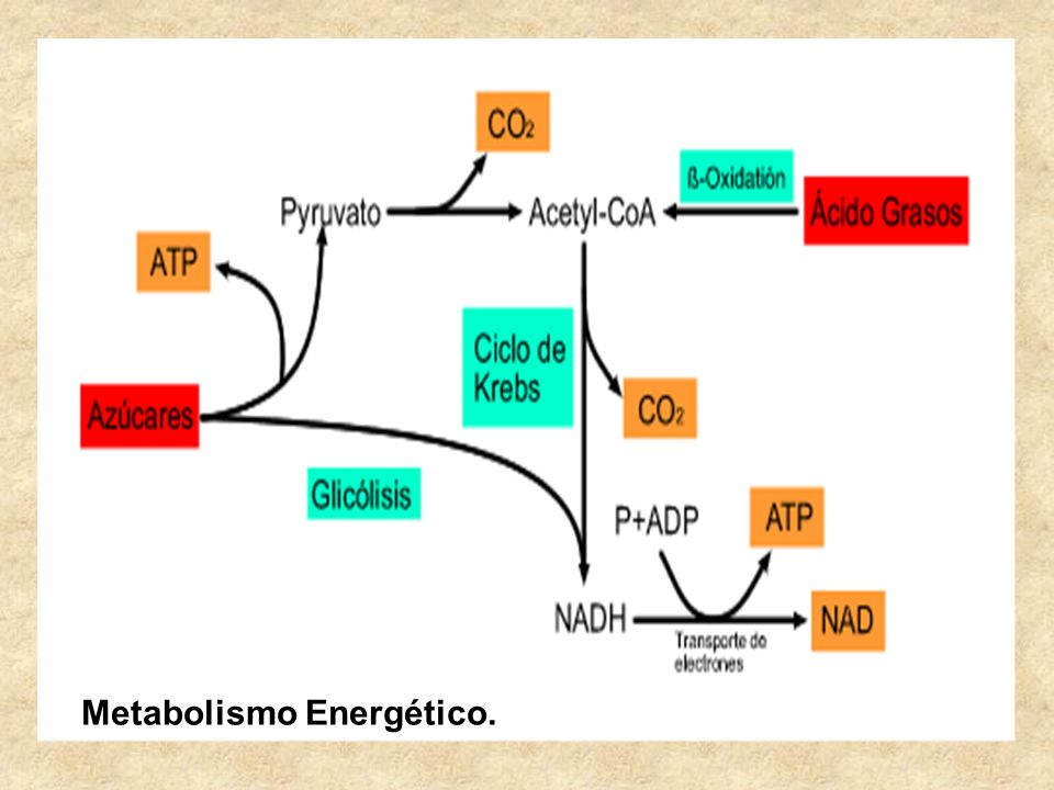 Metabolismo Energético.