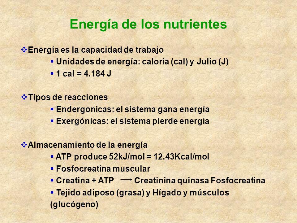 Energía de los nutrientes